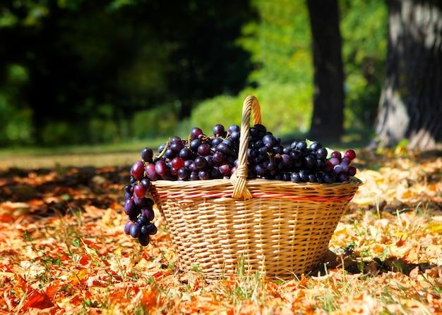 ブドウの緑の葉と木製のテーブルの上のバスケットに白いブドウの熟したブドウのクラスター。ヴィンテージブドウの果実。