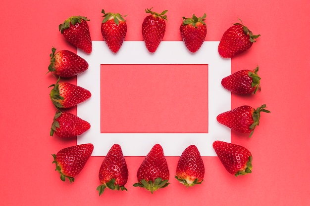 Ripe juicy strawberries lined up on white frame on pink background