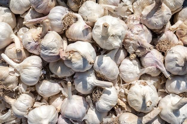 익은 큰 마늘은 야채 시장에서 판매됩니다 천연 야채 배경