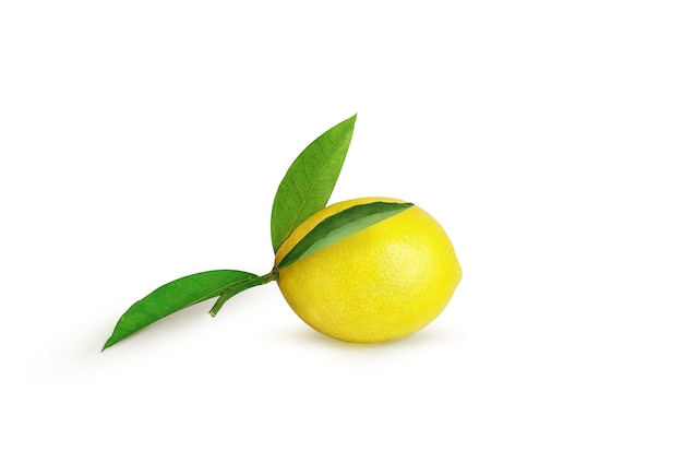 白い背景の上の枝に熟したレモン
