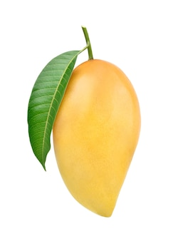 Ripe mango with green leaf isolated on white