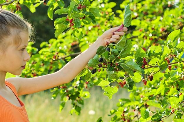 少女の手で熟した桑の実の果実