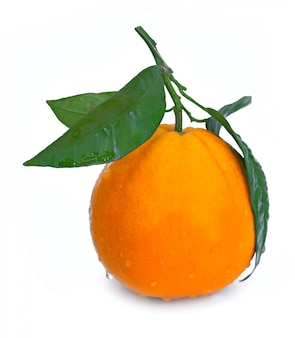 Ripe orange fruit with leaf and water drops