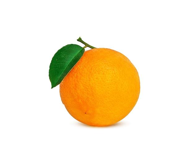 白い背景の上の枝に熟したオレンジ