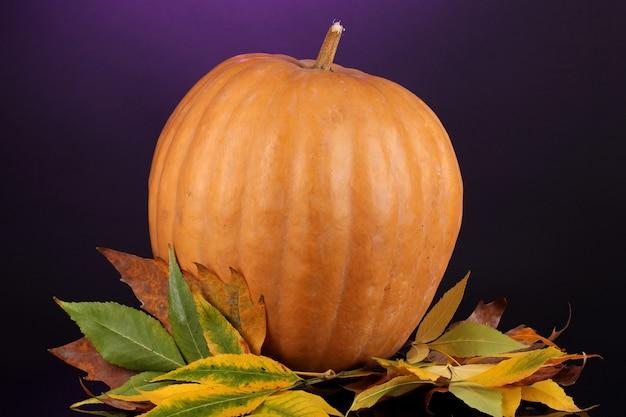 紫色の表面に黄色い紅葉が付いた熟したオレンジ色のカボチャ