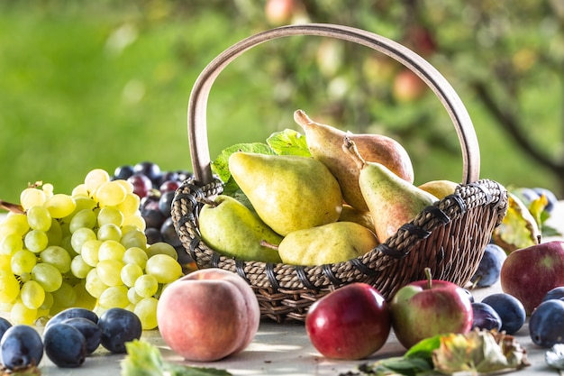 다른 신선한 과일로 둘러싸인 나무 정원 테이블에 있는 나무 바구니에 익은 배.