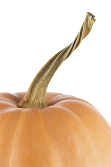 Ripe pumpkin photographed close-up isolated on white background.