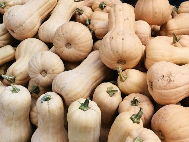 熟したカボチャ屋外野菜の秋の収穫