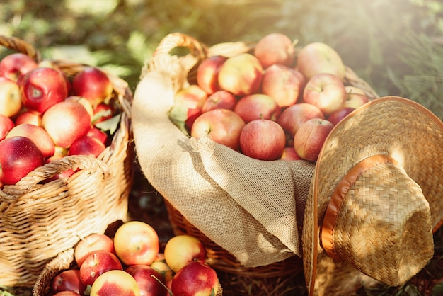 Ripe red apples in a basket on green grass