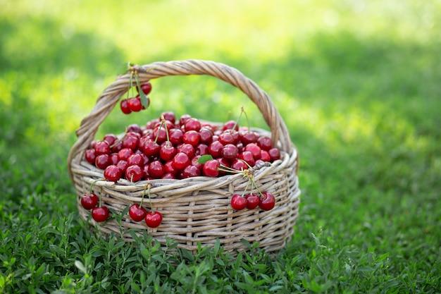 Ripe red cherries in a rustic basket