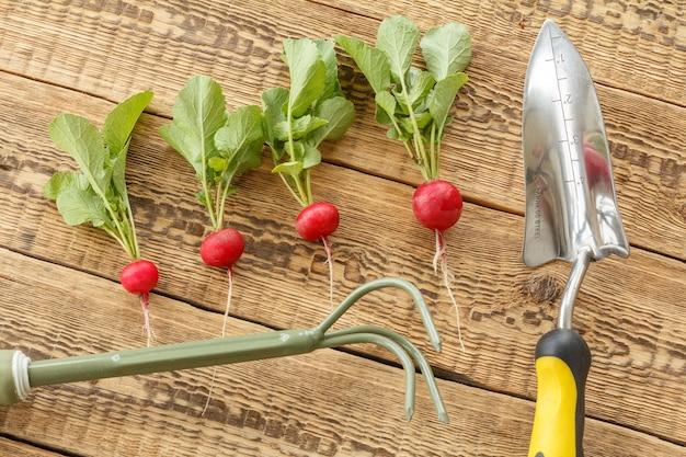 나무 판자에 정원 도구와 나무 판자에 익은 붉은 무. 정원에서 채소를 수확하는 봄.