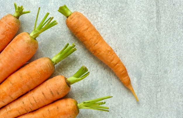 Ripe roots carrots on a gray background with a copy space, close-up