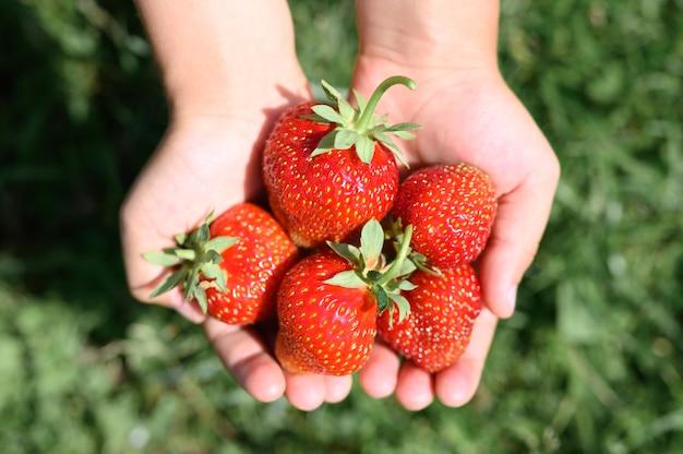 草の上の子供の手で熟したイチゴ