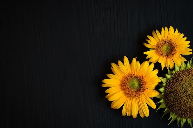 어두운 배경에 씨앗과 노란 해바라기 꽃과 잘 익은 해바라기