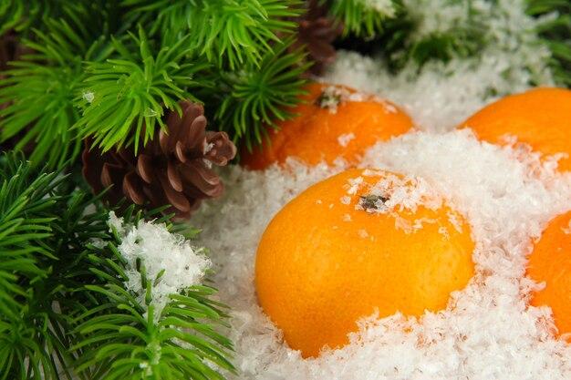 Спелые мандарины с еловой веткой в снегу крупным планом