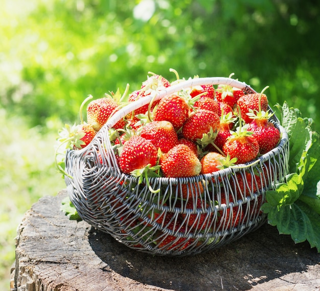 Ripe and tasty strawberries metal a basket on  stump in the street