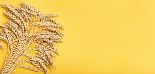 黄色い紙の背景に熟した小麦収穫時期小麦のスパイクがクローズアップ最小限のフラットレイ