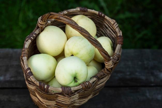 바구니에 쏟아지는 익은 흰 사과. 비타민과 건강 식품. 새로운 수확. 확대.