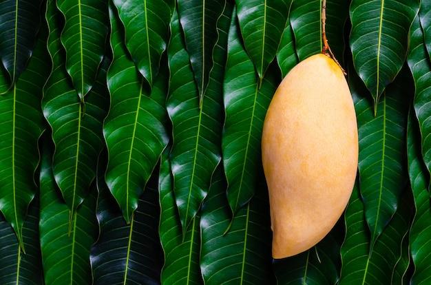 Спелые желтые манго на фоне листьев