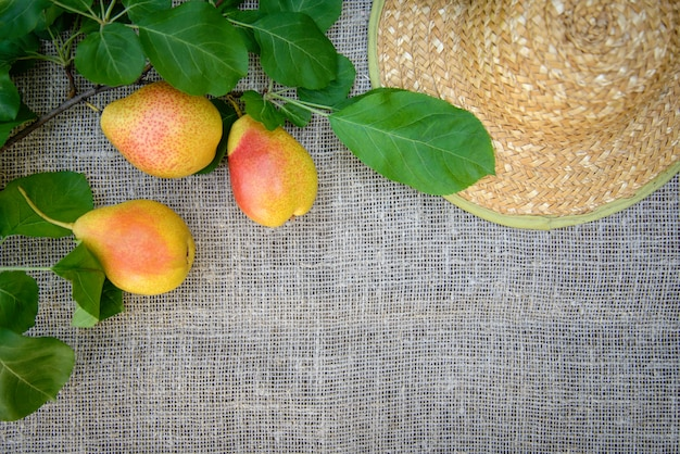 Ripe yellow-red pears and a straw hat on the background of burlap
