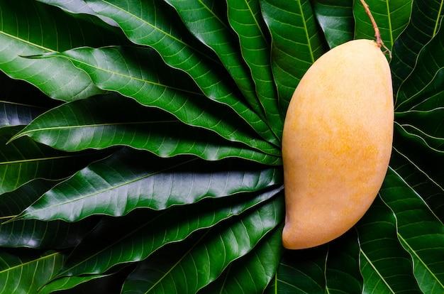 Спелые желтые таиландские манго барракуда на фоне листьев