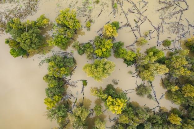 Поднимающаяся вода несет мертвые упавшие деревья во время наводнения в лесу на пойме реки