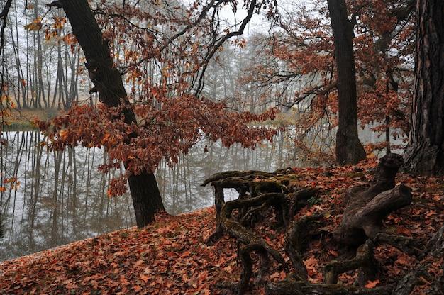 秋の川と森
