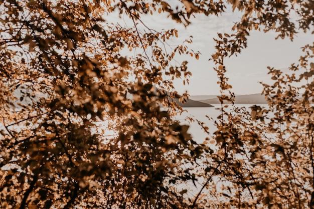 紅葉の葉や木々から川や島々が見えます