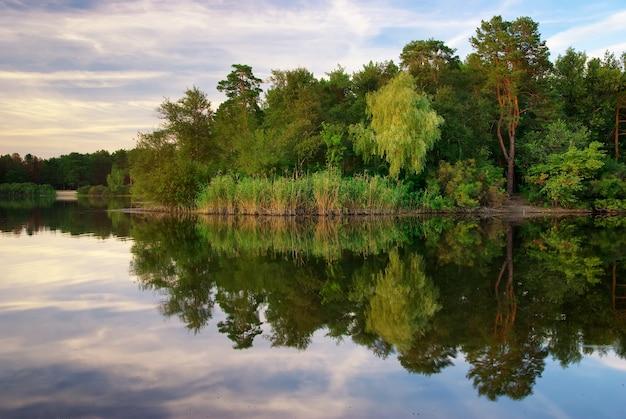 강과 봄 숲