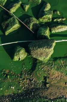 더러운 물, 돌, 조류 꽃이 있는 강둑