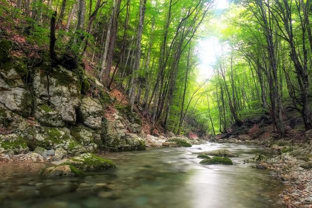 山の森の奥深くにある川。自然の構成