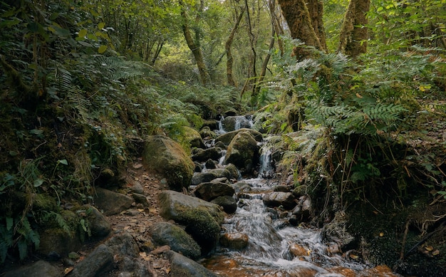 River flowing through the forest between rocks and fallen leaves. galicia forest in summer. santiago's road