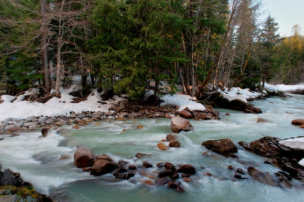 River flowing through a forest, whistler, british columbia, canada