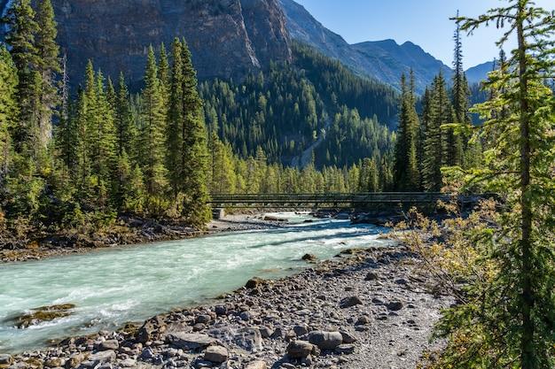 緑豊かな森と夏の川歩道橋の滝