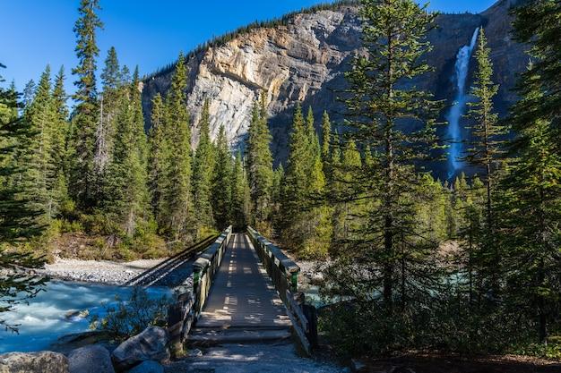 緑豊かな森と夏の川歩道橋の滝 Premium写真