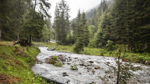 강 숲과 통나무 보기