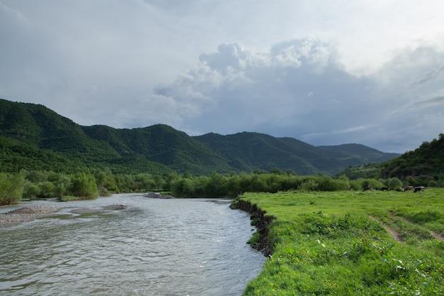 春に森に向かう川