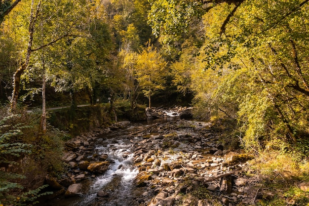 イラティの森またはジャングル、スペインのナバラ北部、フランスのピレネーアトランティックにあるパッセレルデホルツァルテに向かう川