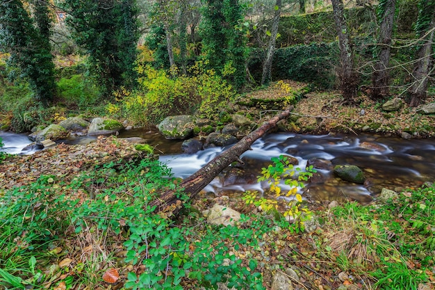 スペイン、エストレマドゥーラ州カセレスの森の川