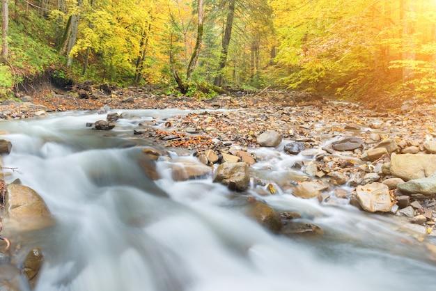 다채로운 쓰러진 나무와 흐르는 물이 있는 가을 숲의 강