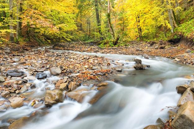 다채로운 나무와 흐르는 물이 있는 가을 숲의 강