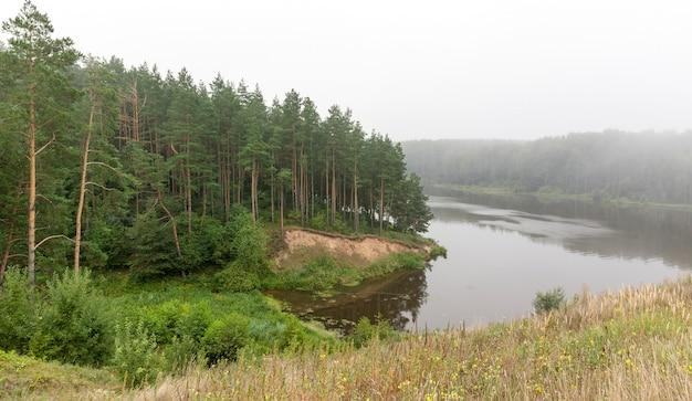흐린 안개가 자욱한 날씨의 강, 해안을 따라 침엽수와 나무, 풍경이 자랍니다.