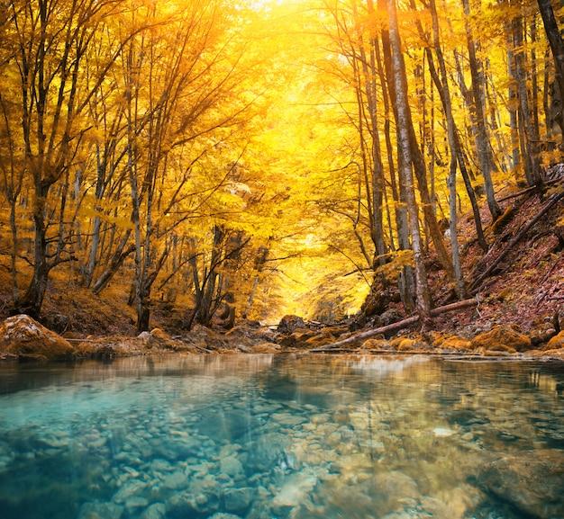 Река в горном лесу.