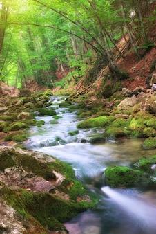 山の森の川。