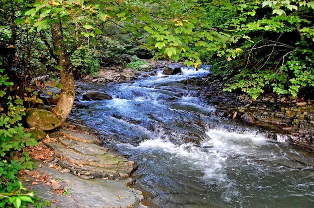 산의 강 carpathians는 녹색 잎을 가진 나무를 성장시키는 해안에 급류 바위를 통해 흐릅니다