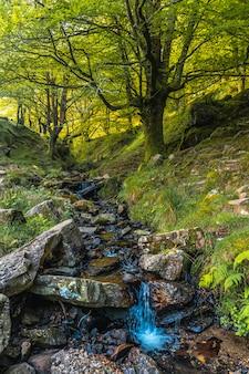 サンセバスチャン近くのウルニエタにあるモンテアダーラまでの道のブナ林の川。バスク国ギプスコア