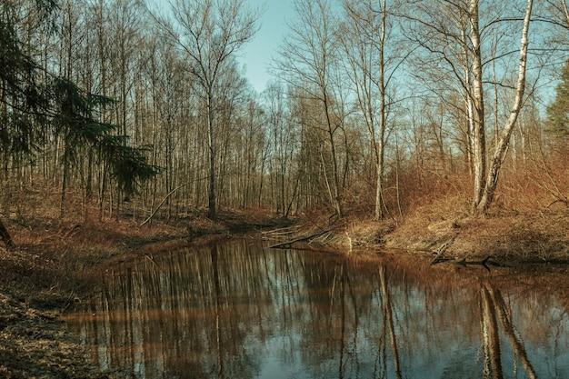 白樺の森の川