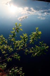 River scene  green