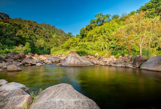 川の石と緑の木、森の熱帯の緑の木の石川