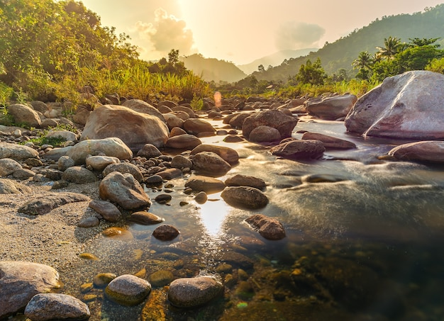 Речной камень и дерево с солнечным лучом, каменная река и солнечный луч в лесу